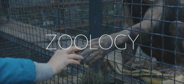 Zoology-620x284